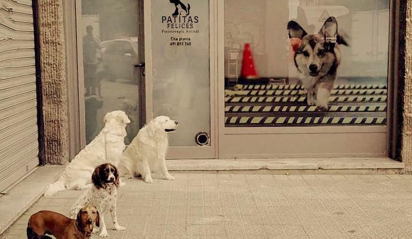 La importancia de la fisioterapia y la rehabilitación en nuestras mascotas