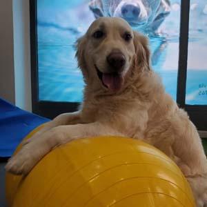 patitas felices fisioterapia animal getxo