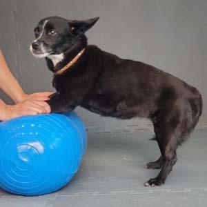 patitas felices rehabilitación animal